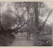 Landskap vid Norrby brunn. Hörn prägat med 1899. Ett träd hänger över vägen.