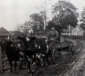 En man och pojke åker oxvagn.