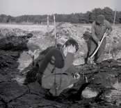 Ulf Erik Hagberg gör en arkeologisk undersökning i Skedemosse 1964.  Kring Kristi födelse, mellan 300 f. kr. och 1000 e. kr var Skedemosse en av södra Sveriges viktigaste offerplatser. Här offrades stora mängder djur, vapen, guld och även människor - allt för att blidka eller tacka gudarna.  Det i särklass mest berömda fyndet från Skedemosse är guldringarna. Det så kallade Skedemosseguldet består av sju halsringar av rent guld med en total vikt på 1,3 kg - en ofattbar rikedom på den tiden. Guldringarna finns bevarade i Statens Historiska museum i Stockholm.