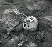 Fynd från Skedemosse vid en arkeologisk undersökning. Ett kranium.