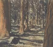 Victoriaskogen, numera kallad Joelskogen i Nybro.