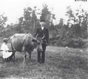 Brobrångenäs, torp under Hasselås, Misterhults socken. Mjölkning: Viktor Nilsson, 1870-1956, samt dottern Marina 1908-1976, mjölkande kon Majros.