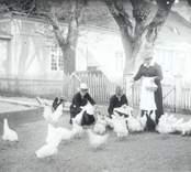 Misterhults gård. I förgrunden förvaltare Karlbergs fru med döttrar matande hönsen.