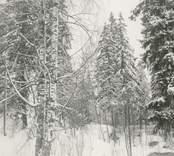 Blackstads kyrka. Foto från öster (från Hallingebergsvägen), taget före avverkningen i mars 1969.