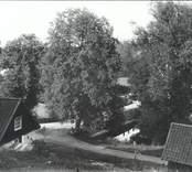 Bron vid sågdammen i Falsterbo 1920.