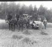 Herman och Josef Nilsson  under slåttern vid  prästgården i  Nynäs.