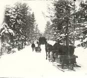 Hästforor med slädar en vinterdag i Hjorted.