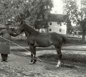 J O Andersson med häst vid Björkhults gård 1911.