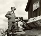 Isak Andersson och sonen Gunnar vevar upp abborrev till tork.