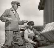 Isak Andersson och sonen Gunnar(?) vindar upp abborrar.