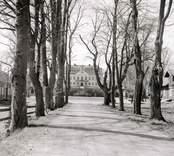 Allén mot Fredriksbergs herrgård.