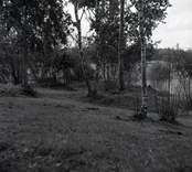 Lundsbacken, en gravfält från yngre järnåldern.