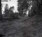 Lundsbacken, ett gravfält från yngre järnåldern.  Gravfält. Foto M.H. 1956