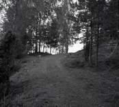Lundsbacken, ett gravfält från yngre järnåldern  Gravfält. Foto M.H. 1956