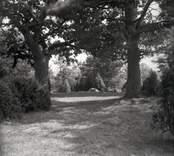 Träd vid Norrby brunn, hälsobrunn.