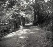 Allé vid Norrby brunn, sedd från källan mot öster.