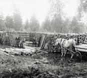 Virkesupplag vid Kianäs järnvägsstation år 1927.