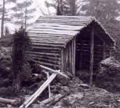 Rekonstruktion av en kolarkoja i Barkeström.