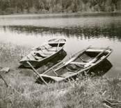 Två ekor i sjön vid Bjurvik.