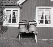 Bikupor av halm i Gunnabo