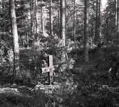 Träkors vid Alstorps Hage i Nynäs.
