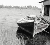 E. Wikströms storbåt. Foto: 19/08 1951.