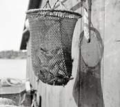 Fisk i korg på Vinö.