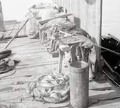 Olika fiskedon. Revbark med rev.