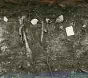Hälleberga kyrka: Arkeologisk utgrävning efter branden 1976-10-18. Grav.