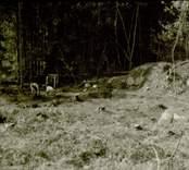 Arkeologisk undersökning  Boplats C:2 under utgrävning. Från nordost.