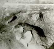 Arkeologisk undersökning 920330-921026  Boplats B. Anläggning 100, härd? Grop, detaljbild: keramik, plan, från öster.