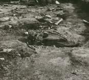 Hästkranium, påträffat vid utgrävningen av Skedemosse.