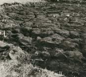 Översikt av det 1959 finundersökta området vid utgrävningen av Skedemosse. I förgrunden ses guldring nummer 135