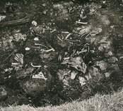 Skelettrester påträffade vid utgrävningen av Skedemosse.