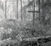 Järnkors i skogen i Madesjö.