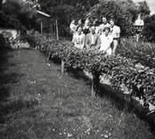 Trädgård ritad 1927.