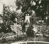 Trädgård i Simontorp; ritad 1927.