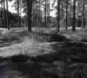 Stensättning i skogen i Lofta.