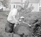 Albert Karlsson slipar lien och sonen Sven drar.