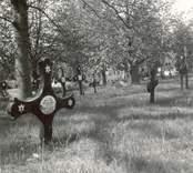 Kyrkogården i Blackstad socken, gravvårdar med emaljskyltar (från Ankarsrum).