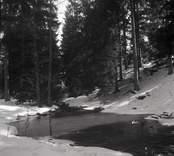 En bäck i skogen vid Örsjöåsen.