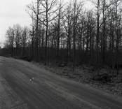 Gravfältet östra om hembygdsgården.