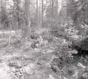 Skog i Virkvarn.