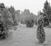 Enbuskmark på Runnö.