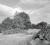 Slagen åkermark och rösen. Foto: 19/07 1952.