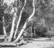 Nybro Badhuspark.