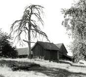 Ekonomibyggnader på ön Stevassen i Tjusts herrgård.