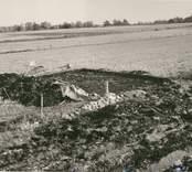Översikt över det finundersökta området i Skedemosse hösten 1959. I bakgrunden till höger skymtar Bredsätra kyrka.