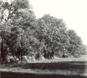 Buskage i närheten av Källa ödekyrka.