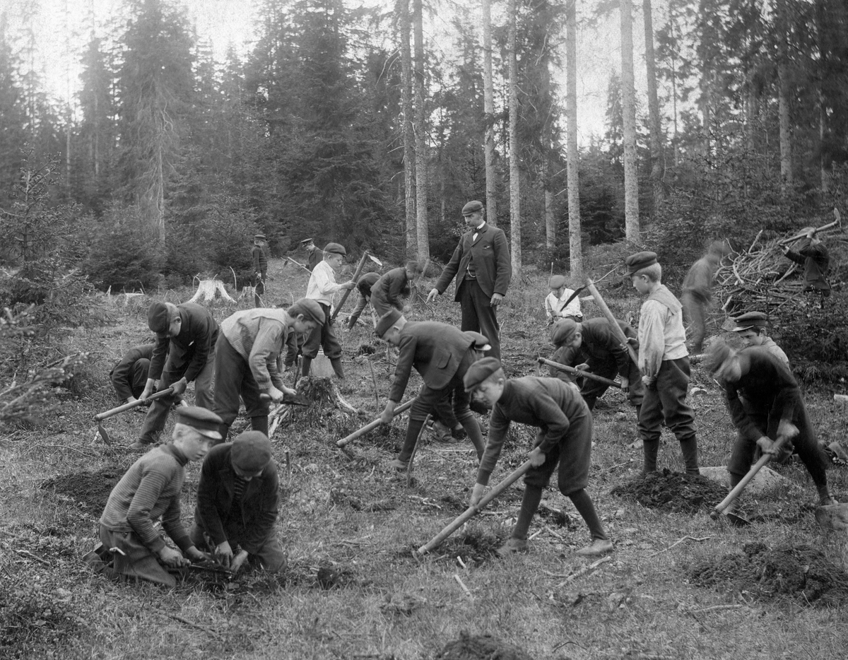 """""""Skogplantning ved skolebarn."""" (Foto/Photo)"""